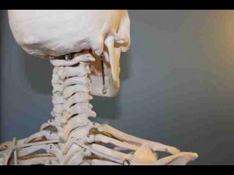 Mejores libros de anatomia humana - Mejoreslibrosde.com - YouTube