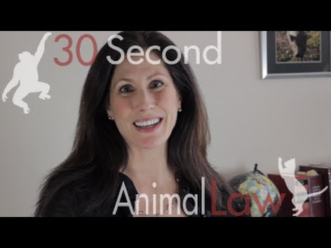 Want to be an Animal Lawyer? | 30 Second Animal Law