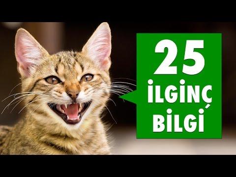 Kedilerle İlgili 25 İlginç Bilgi