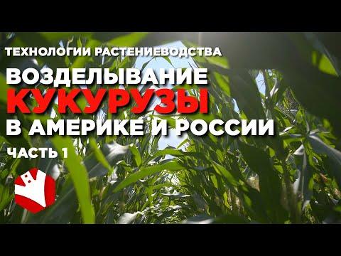 Американские технологии возделывания кукурузы | Выращивание кукурузы в России и Америке
