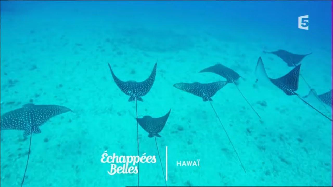 Site de rencontres gratuit Hawaii