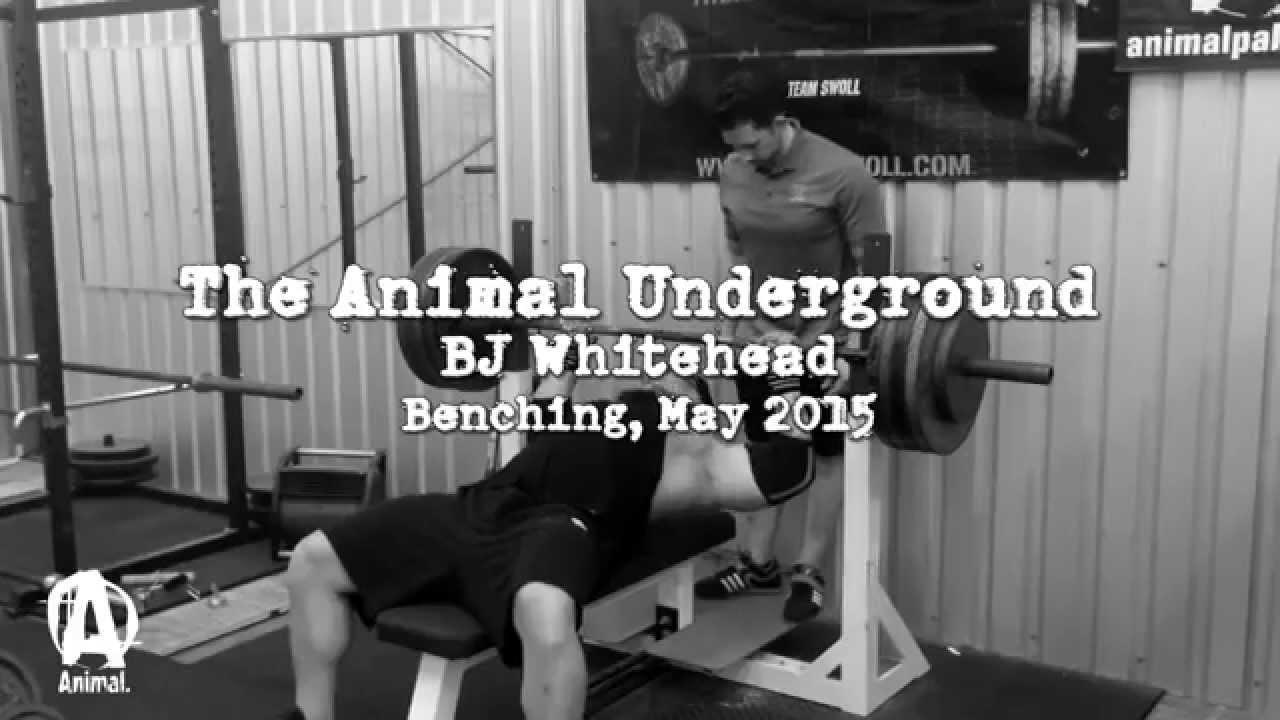 Download The Animal Underground: BJ Whitehead Benching