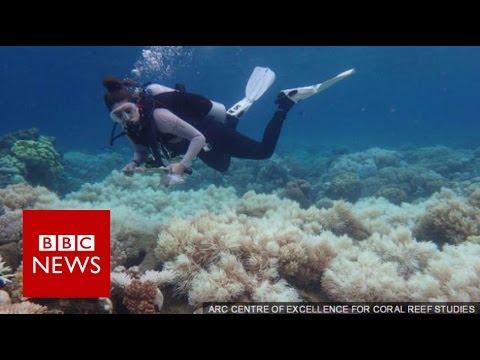 great-barrier-reef:-2/3-damaged-in-'unprecedented'-bleaching---bbc-news