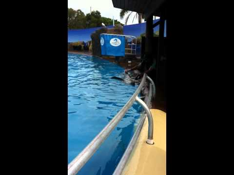 Dolphin Handjob from YouTube · Duration:  56 seconds