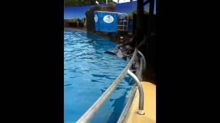Dolphin Handjob
