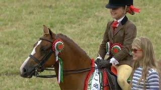 Ceffyl Gorau'r Sioe | Supreme Champion Horse