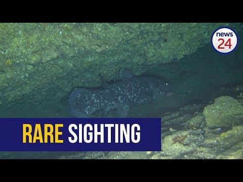 WATCH: Rare Coelacanth Filmed Off Sodwana Coast