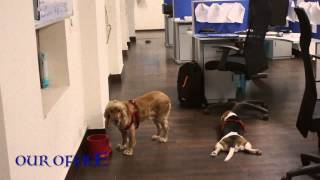 Heidi And Cindy - Cute Dogs Enjoying Break Time At Office [hd]