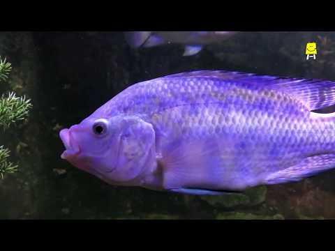 How Does One Breathe Underwater? (Hindi) - कैसे लेते हैं पानी में सांस?