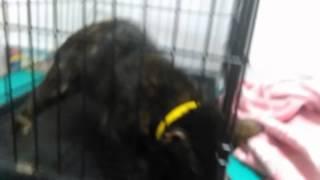 Случай бешенства у кошки