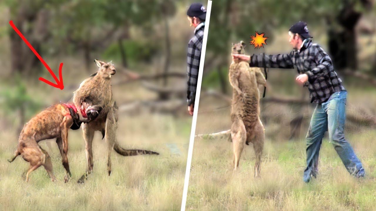 People Saving Animals From Wild Animals
