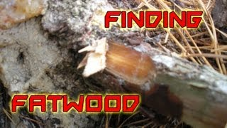 How To Find Fatwood - Detailed Explanation