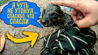 10 Самых Душераздирающих Спасений Животных! #2