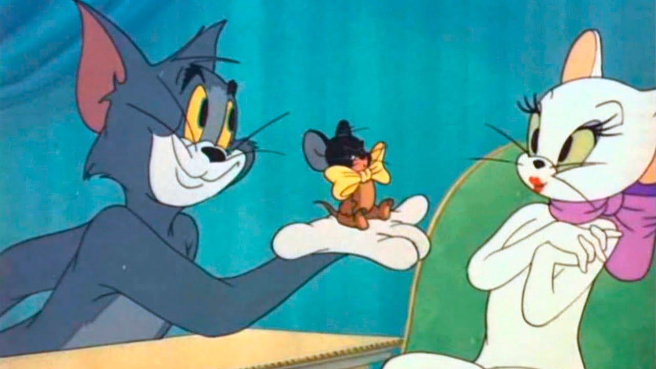 Tom and jerry casanova cat
