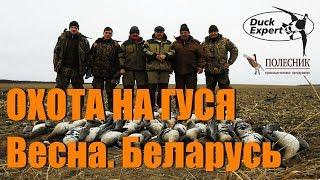 НЕЗАБЫВАЕМАЯ ГУСИНАЯ ОХОТА весна Беларусь. Нашествие гуся!