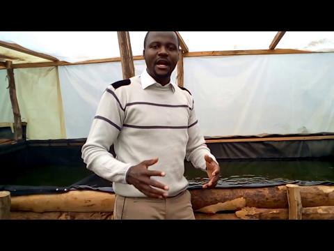UFUGAJI/FUGA SAMAKI KISASA TANZANIA- POSITIVE EYE CO. LTD