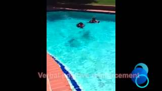 Newfoundland Dog Water Rescue Orange County Dog Training