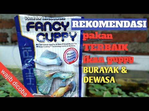 Rekomendasi Pakan Terbaik Untuk Ikan Guppy Burayak & Dewasa