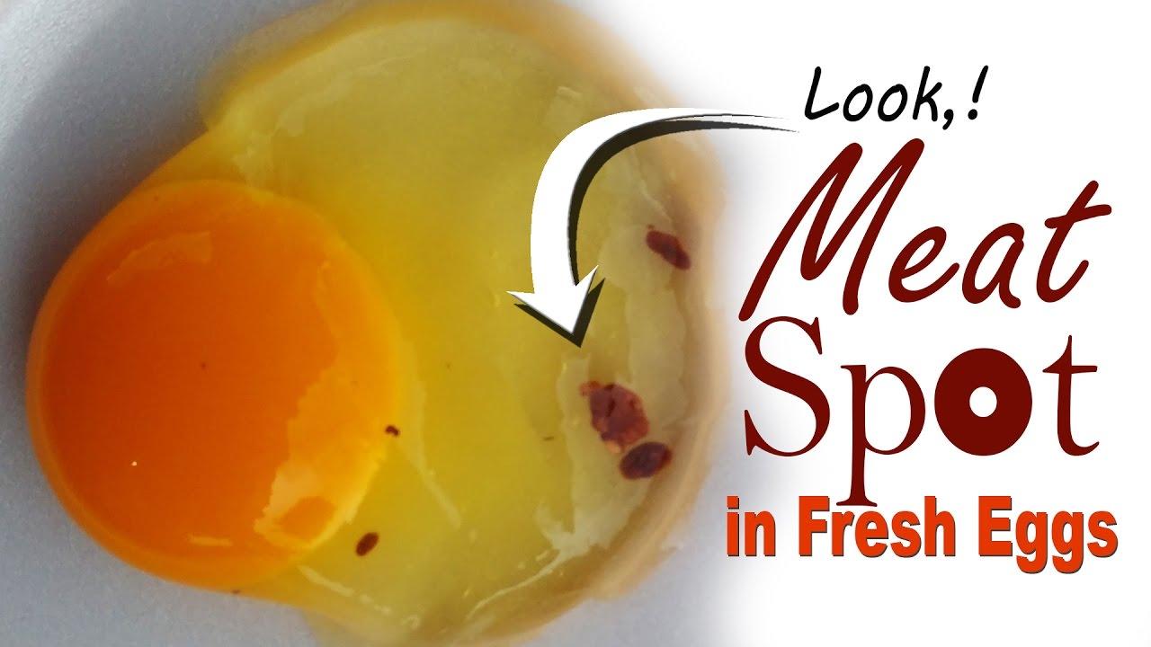 Field Case Study Blood Spots in Egg