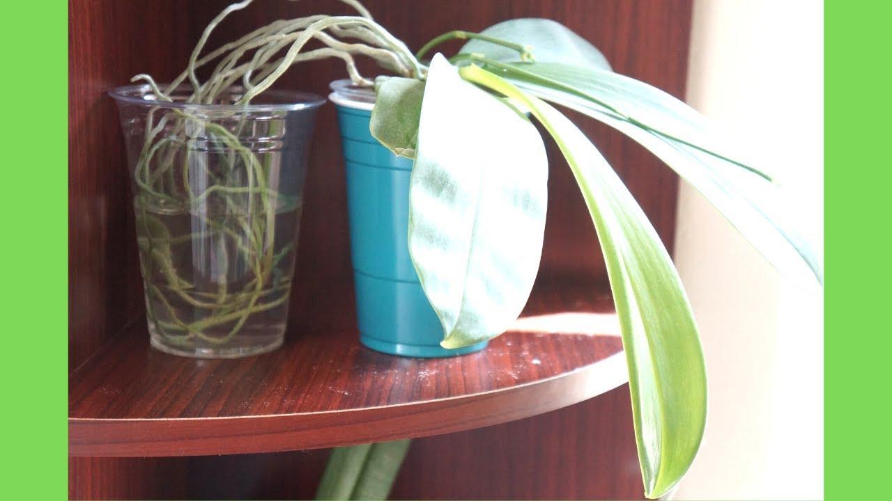 新手必學! 澆水技巧 - 看我如何對蘭花們澆水的 | 養護技巧 | 蘭花種植 - YouTube