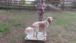 potty training: how to train your dog to ring a bell to be let outside