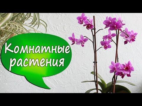 1. Что такое орхидея МУЛЬТИфлора? Ароматный пышный фаленопсис