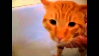 Кошка плачет не хочет купаться(ржач)