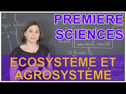Ecosystème et agrosystème - Sciences 1ère ES/L - Les Bons Profs
