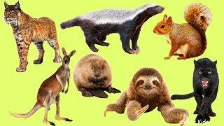 Животные для детей | Дикие Животные | Учим названия и звуки Диких Животных | Учим Диких Животных