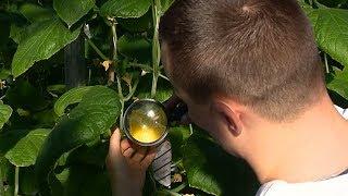 Страна садов: аграрии Кубани переходят на биозащиту растений