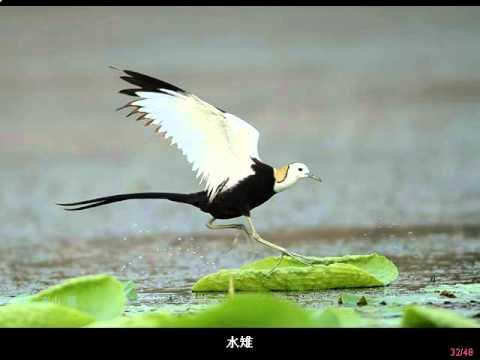 精彩鳥類攝影作品  3