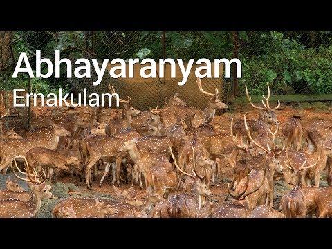 Abhayaranyam