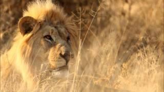 Africa - Instrumental