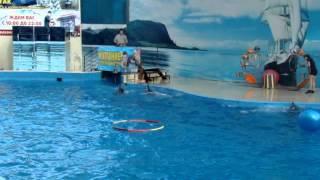 Копия видео дельфинарий Немо(очень понравилось выступление,а ведь это только часть., 2013-09-18T14:08:49.000Z)