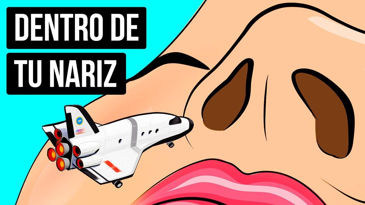 Download Un viaje dentro de tu nariz para descubrir cómo funciona el olfato
