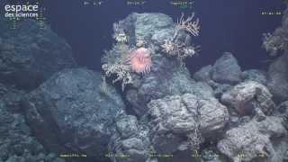 À la découverte d'un volcan sous-marin