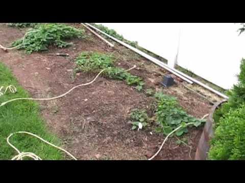 Bobby M Building a Trellis for Hop Plants