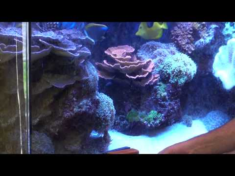 Managing Algae Growth  - ReefKeeping Video Podcast by AmericanReef - Start a Saltwater Aquarium