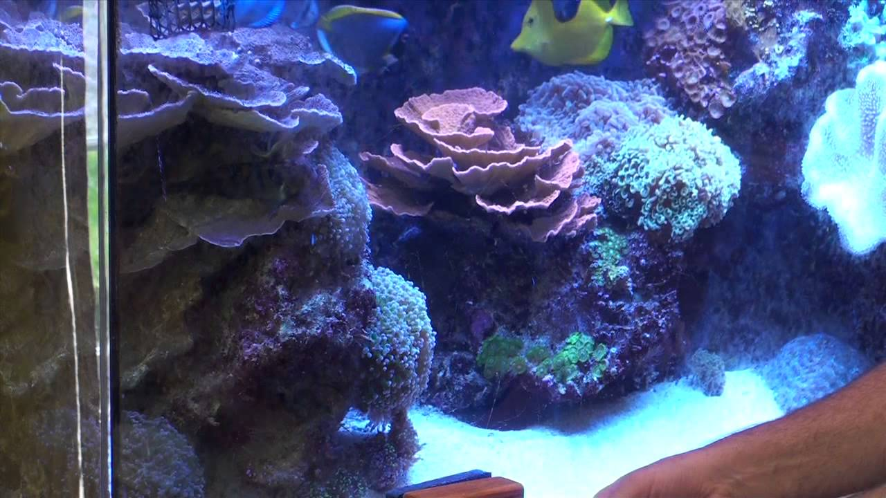 Managing algae growth reefkeeping video podcast by for How to start a saltwater fish tank