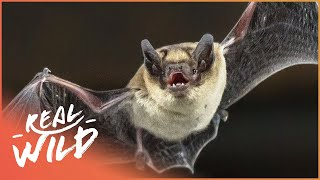 Austin Stevens Adventures - Killer Amazon Bats [Documentary Series] | Wild Things thumbnail