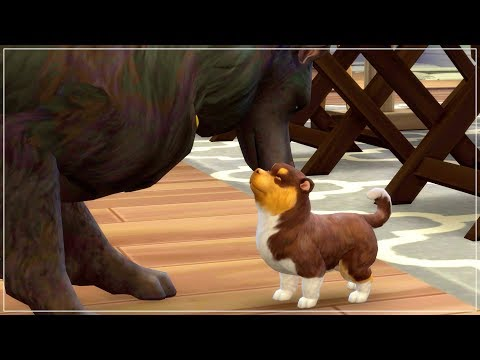 pregnant-with-puppies!!-|-the-sims-4-|-cats-and-dogs-🐱🐶-—-part-8