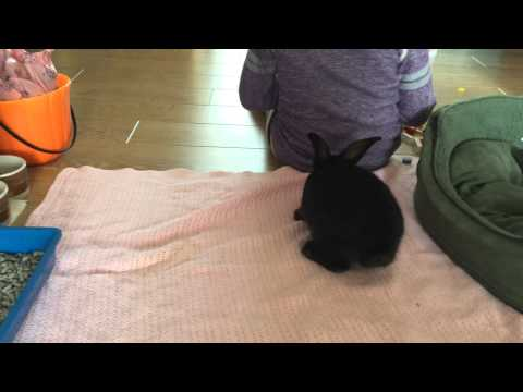 8 Week Old Bunny Exploring The House For The First Time