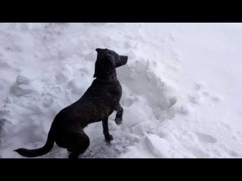 2014 Blizzard In Eastern Canada
