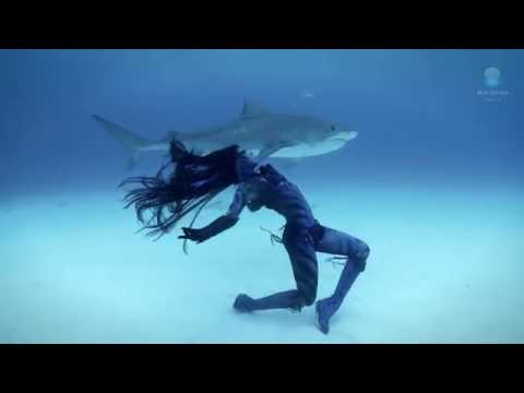 Tigress Shark   Woman Dances with Tiger Sharks