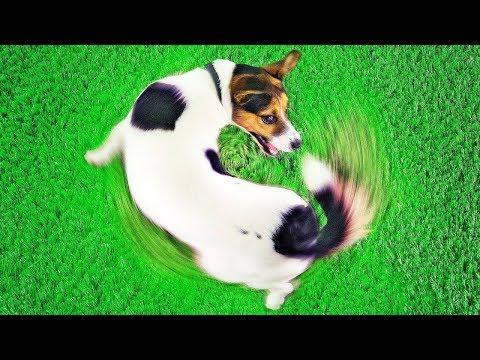Как понять что собака