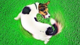 Как Научиться Понимать Свою Собаку: Объяснения 10 Собачьих Привычек