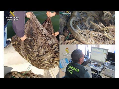 Sorprenden en el Mar Menor a 4 personas pescando ilegalmente 180 kg de anguila