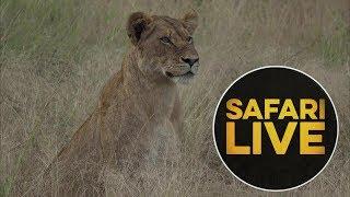 safariLIVE - Sunset Safari - May, 18. 2018