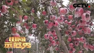 《田间示范秀》专家支招 让老果园重焕新生 20200318   CCTV农业