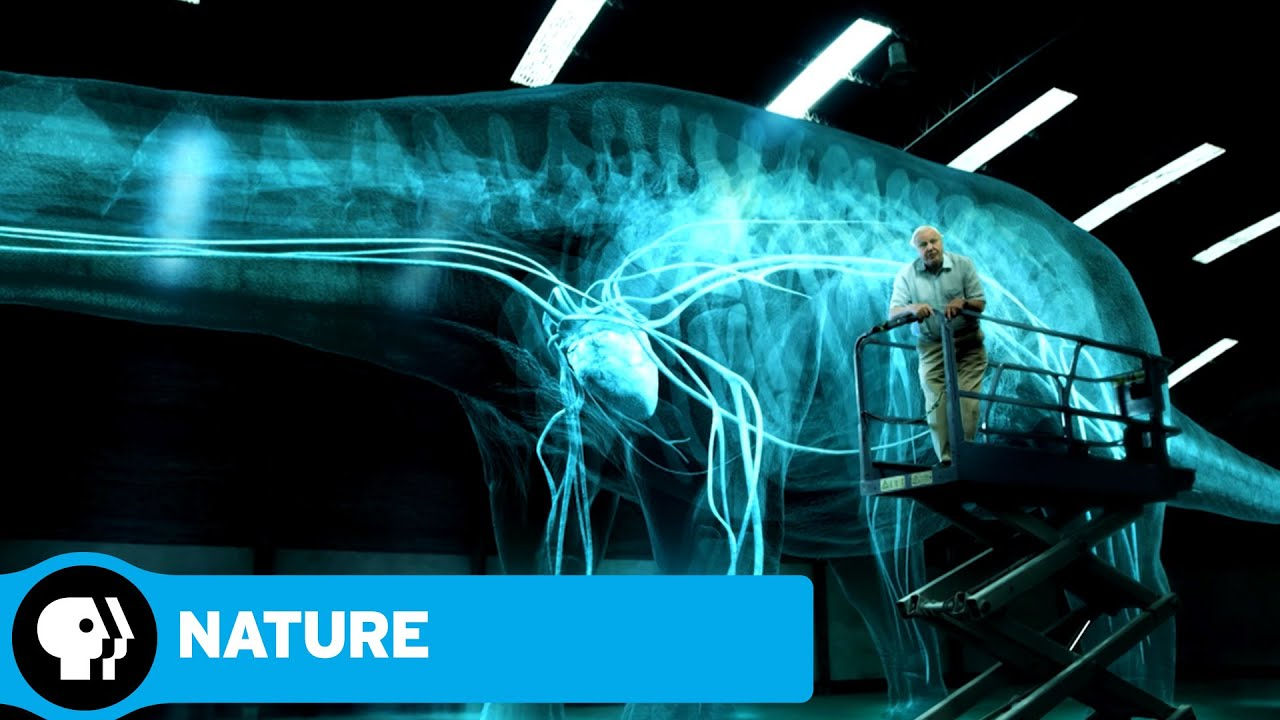 NATURE: RAISING THE DINOSAUR GIANT | David Attenborough & Dinosaur Hearts | PBS